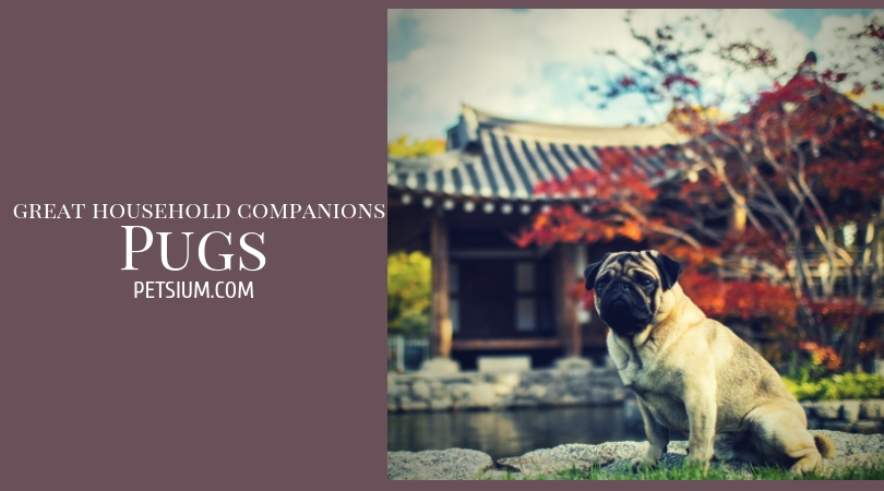 Pugs important information