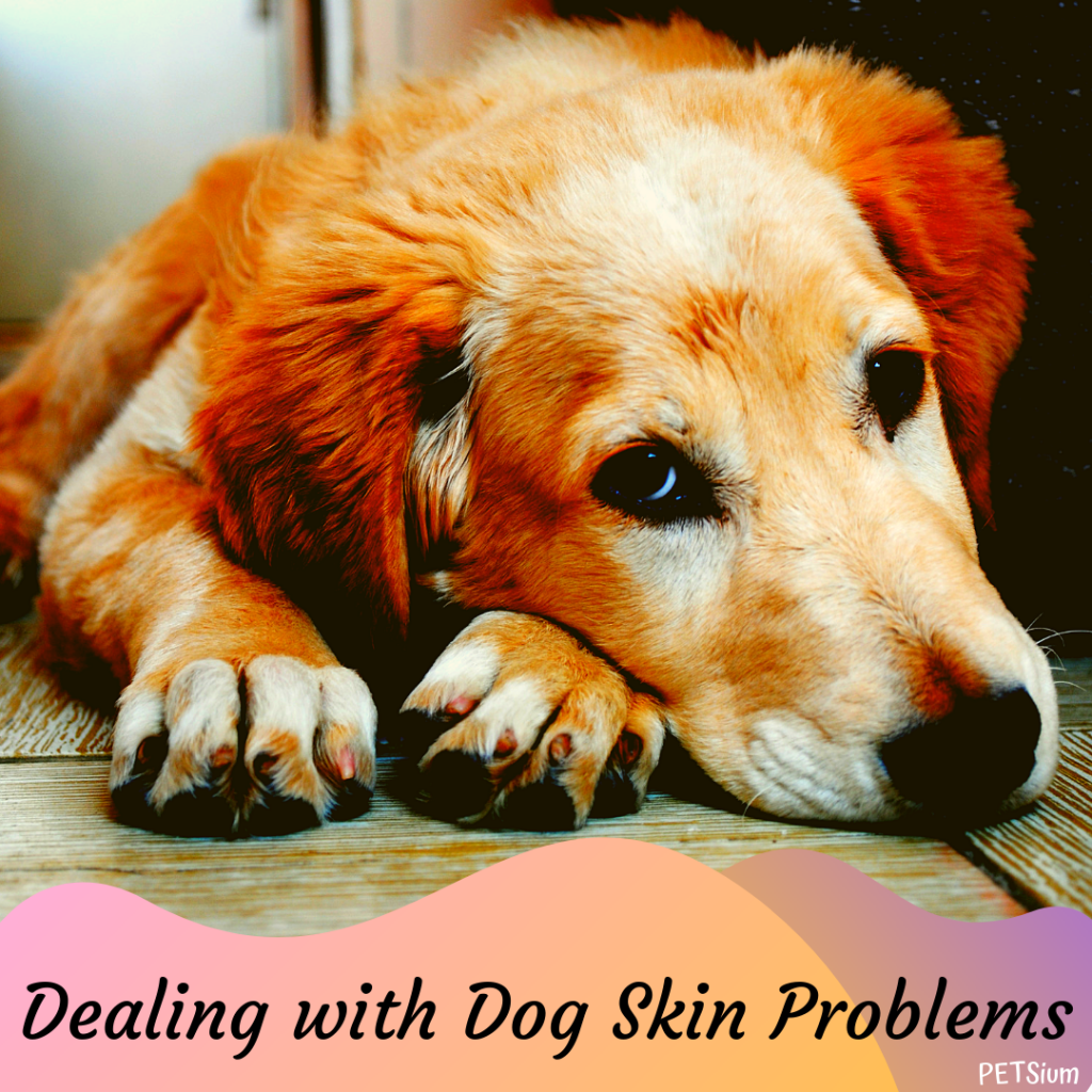 dealing with dog skin problems