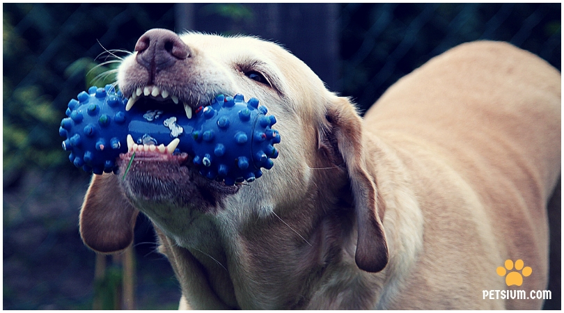 dental disease in dogs and cats
