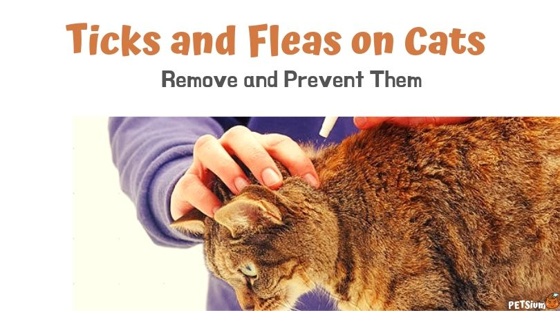 method for removing cat ticks
