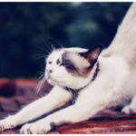 things to watch for in cats health