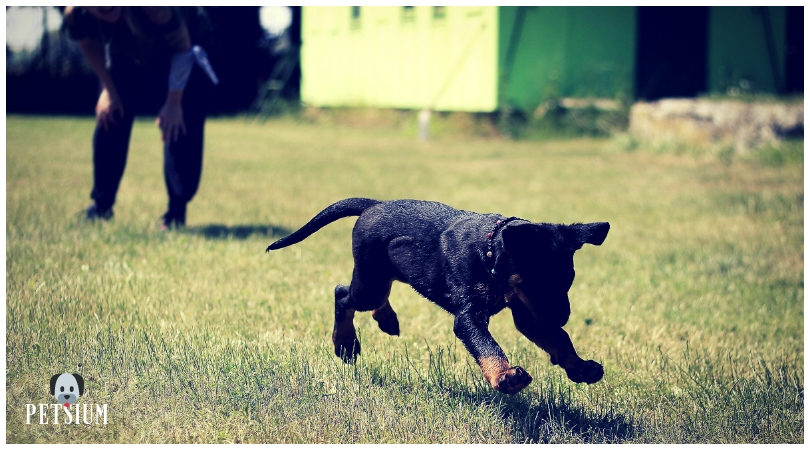 Importance of Training for Dogs