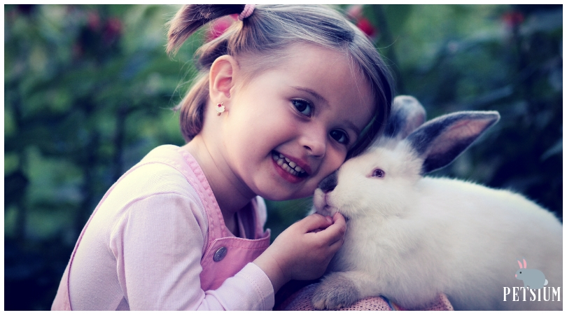 Is it a good idea to take a rabbit for a pet
