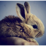 cute rabbit for your home pet