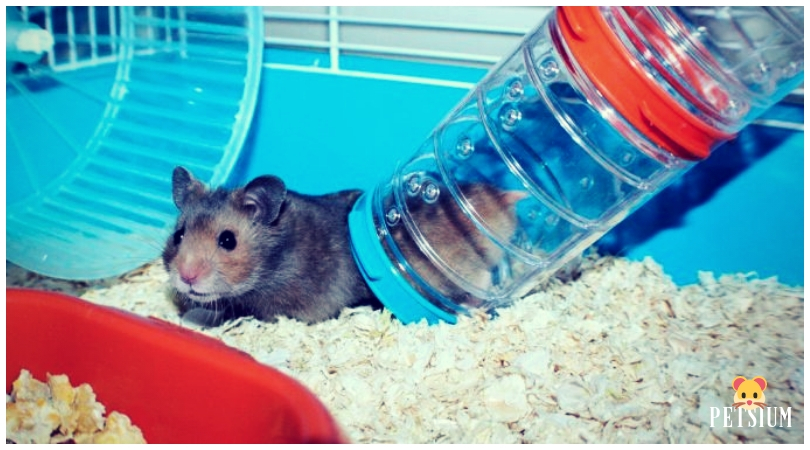 hamster section houses