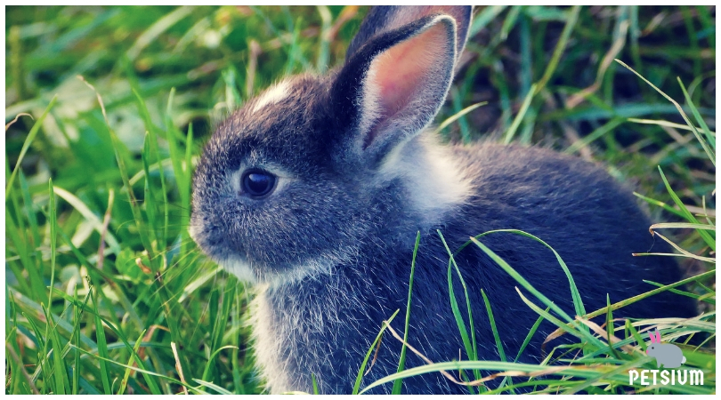 how to choose rabbit for your pet