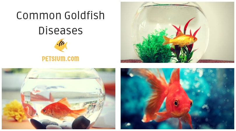 how to treat goldfish health problems