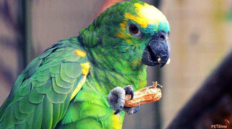 parrots and pet birds