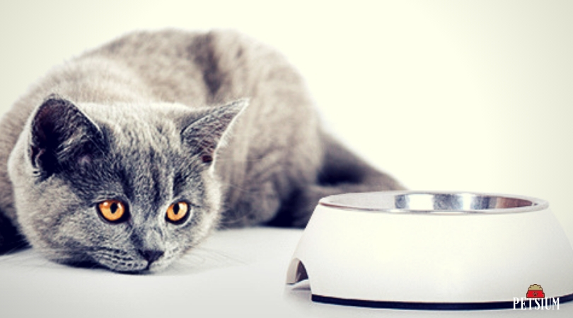 dry cat food information
