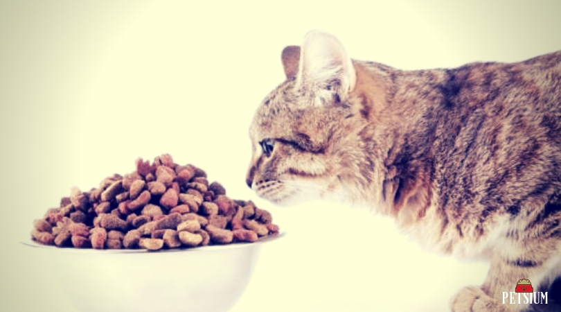 feed your cat with the new cat food