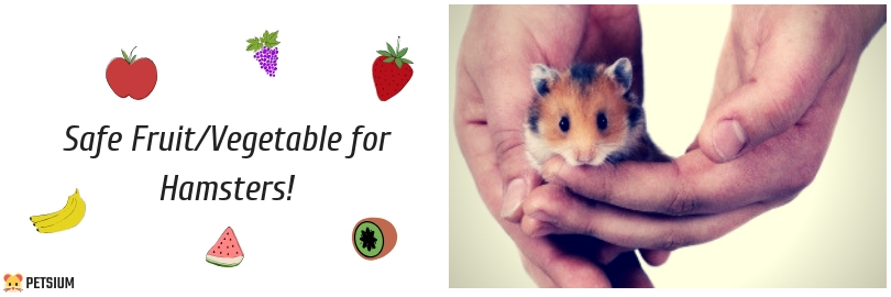 what fruit and vegetables can hamsters eat