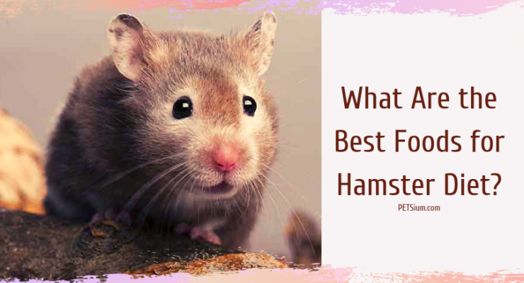 how to choose safe hamster food