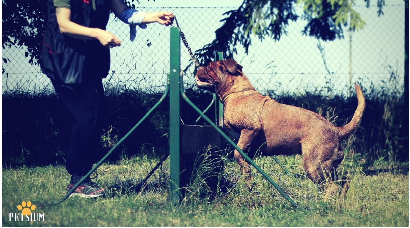 necessary formal obedience training for dogs
