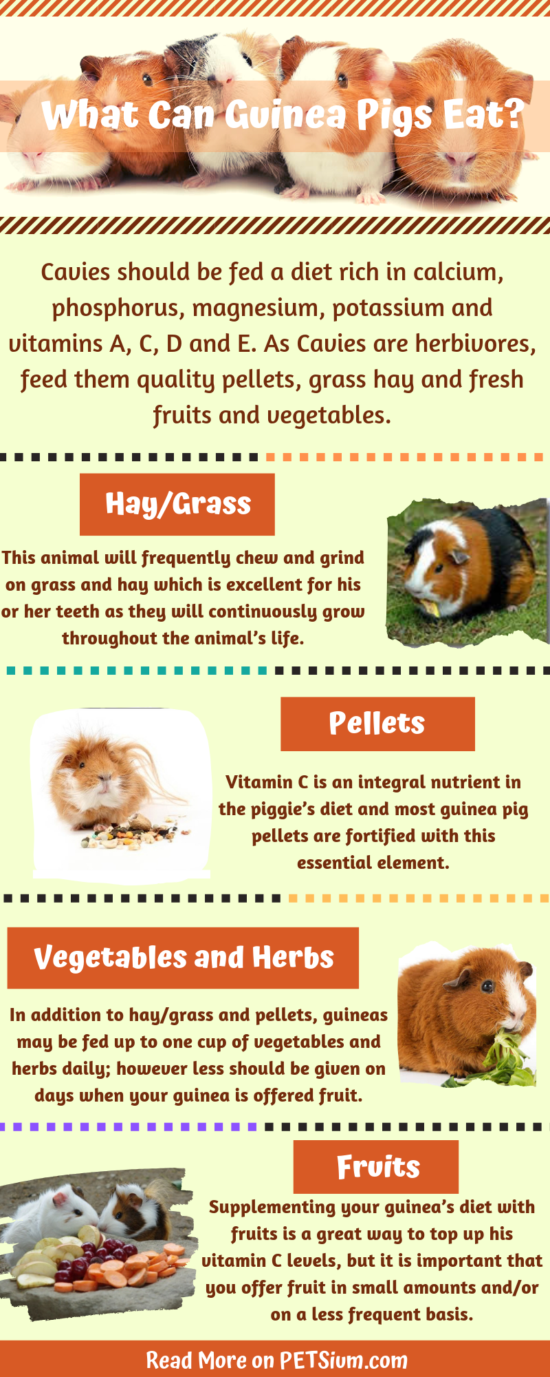 guide to the guinea pig diet infographic