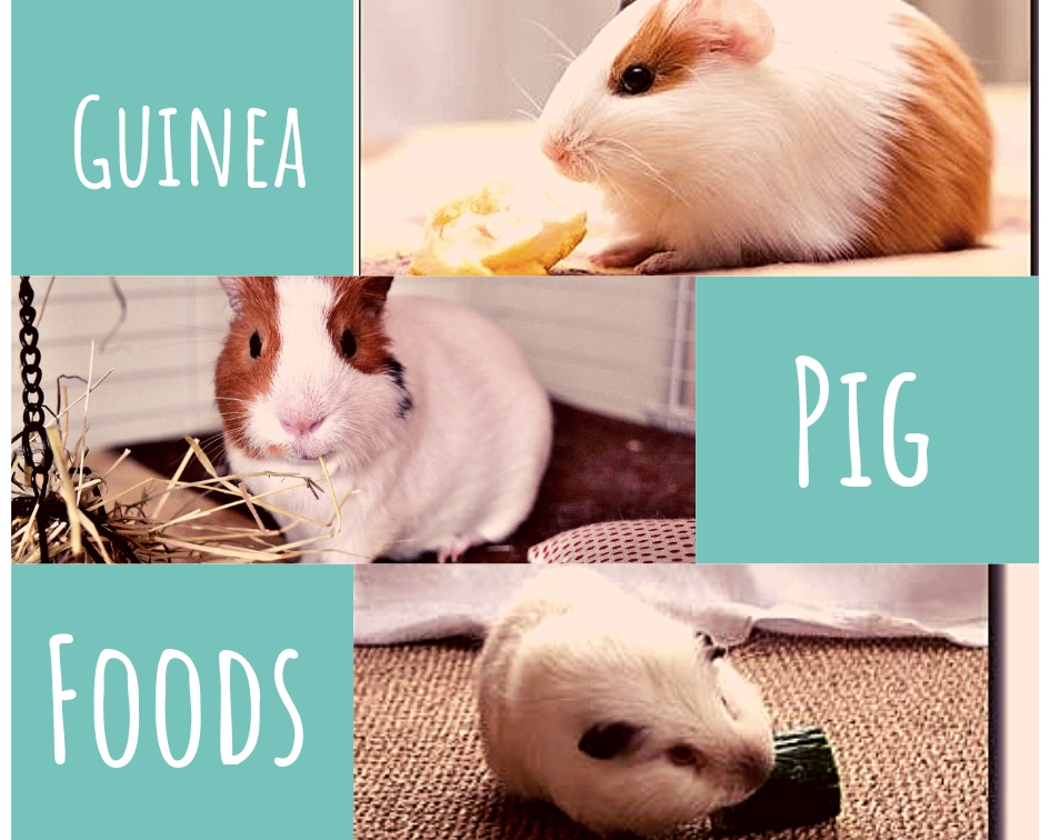 guinea pig favorite fruits and veggies