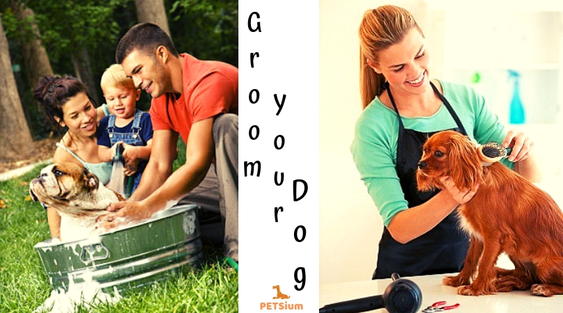 how to groom a dog at home