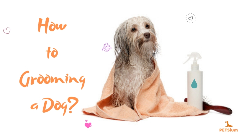 how to grooming a dog