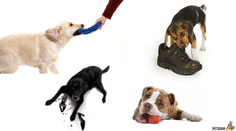 stopping dog chewing problems