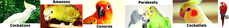 types of parrots bird