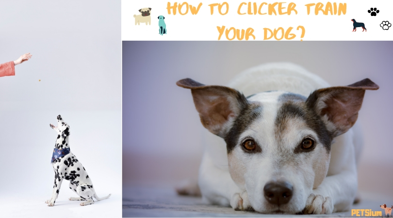 why train a dog with a clicker