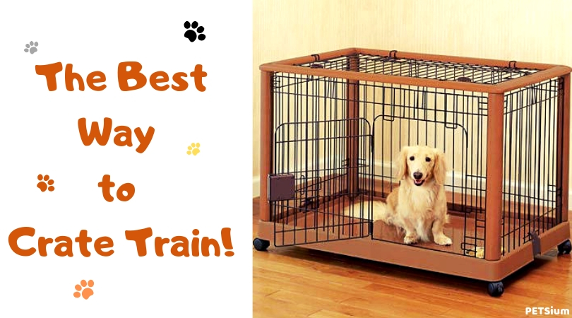 crate train a puppy fast