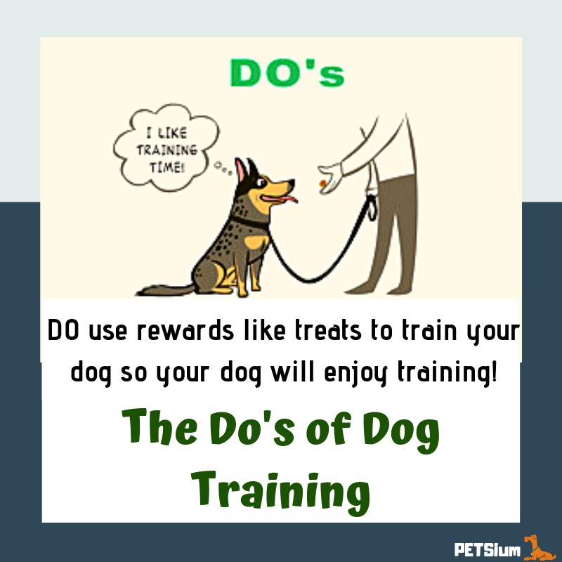 do's of dog training
