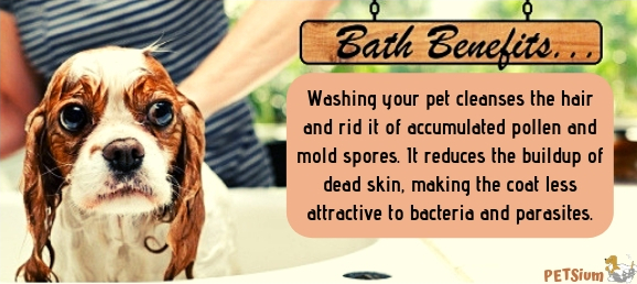 dog bath benefits