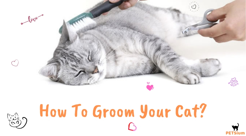 how to groom a cat that hates it