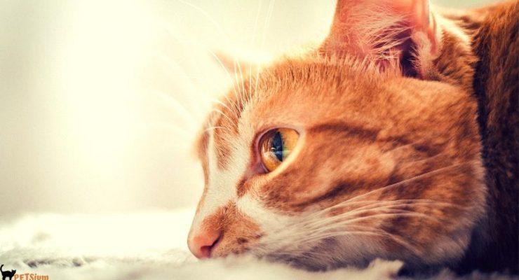 the most annoying cat behavior urine spraying