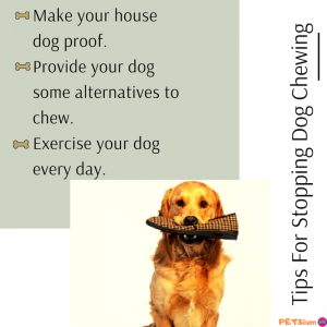 tips for stopping dog chewing
