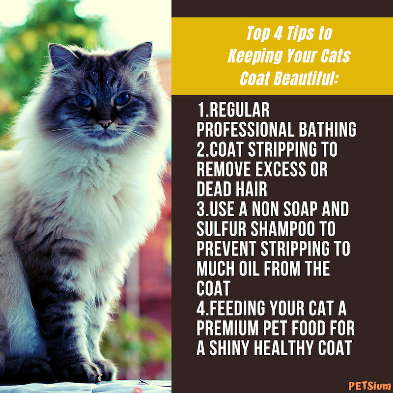 top 4 tips to keeping your cats coat beautiful