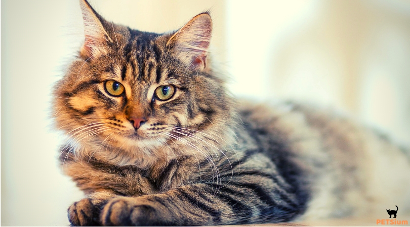 why groom cats
