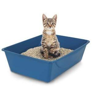 Petmate Open Litter Pan for Kitten