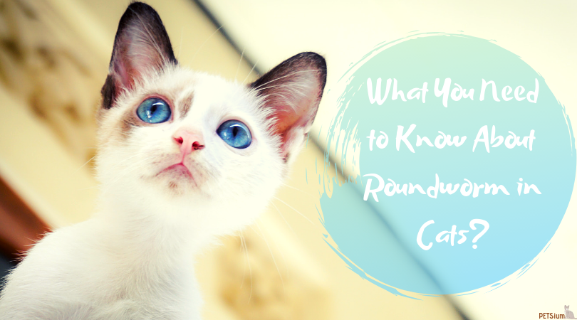 all about roundworms in cats