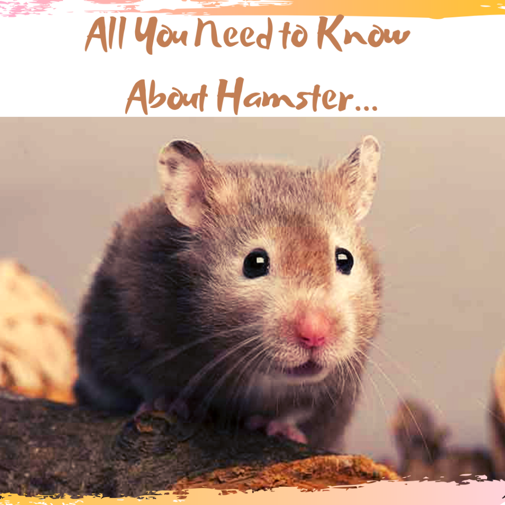 all you need to know about hamster