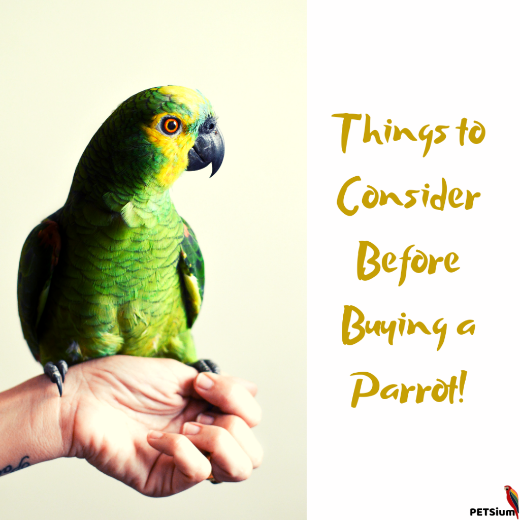 buying a parrot for pet