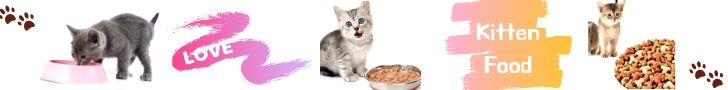 what can kittens eat