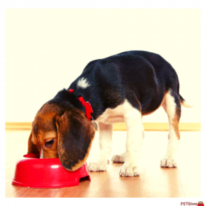 what does hypoallergenic mean in dog food