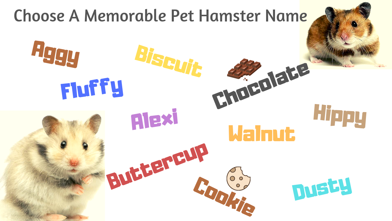 choose a memorable pet hamster names