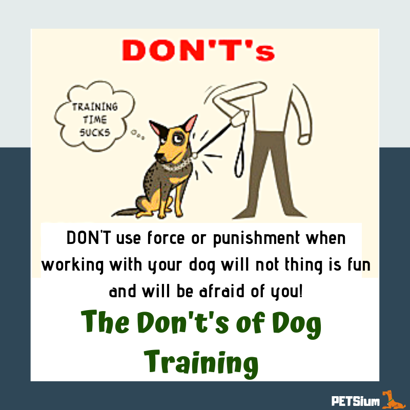 the don't's of dog training