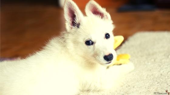 stop puppy bad behavior