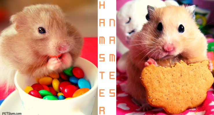 what should I name my new pet hamster