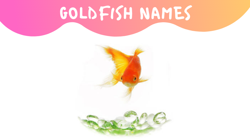 best goldfish names