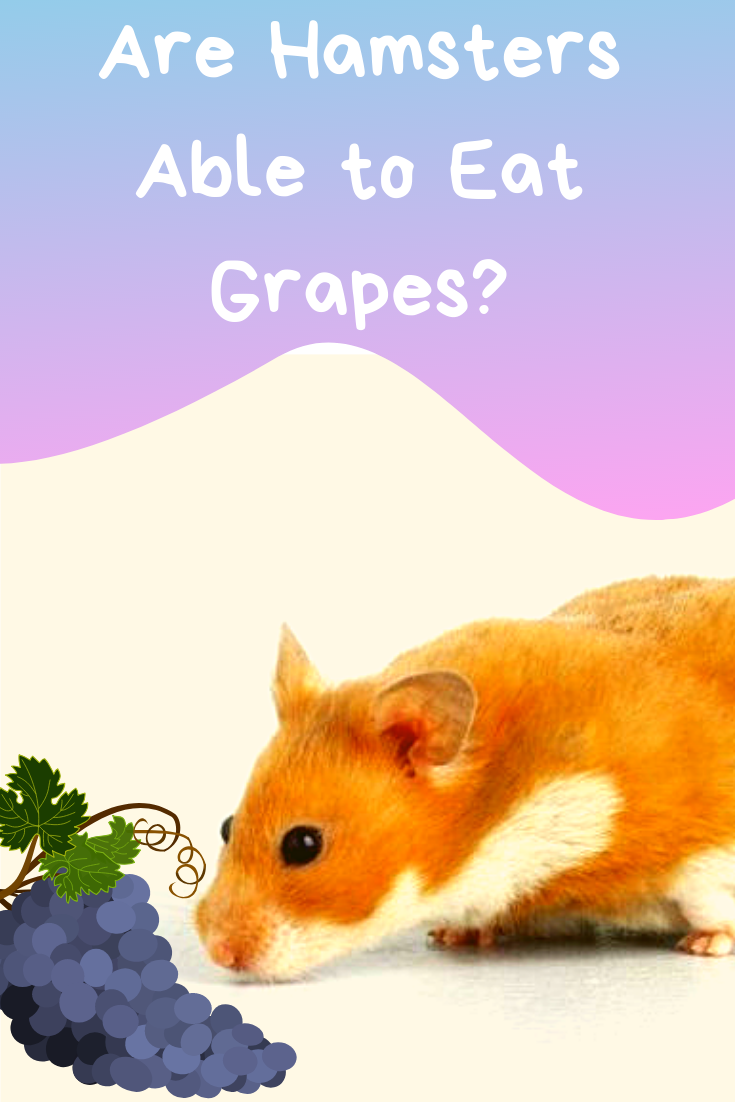 can my hamster eat grapes