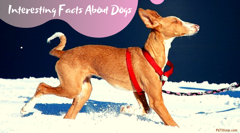 interesting facts about dogs