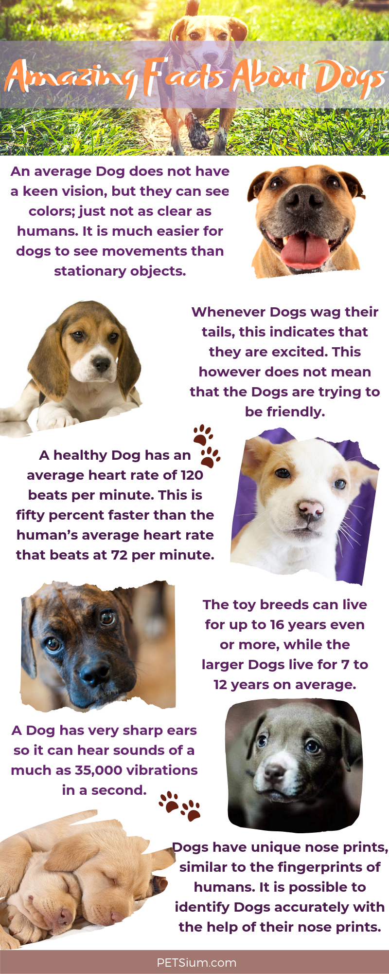 what are interesting facts about dogs infographic