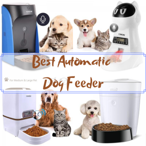 Best Automatic Pet Feeder for Dogs