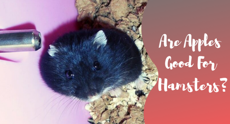 are apples good for hamsters