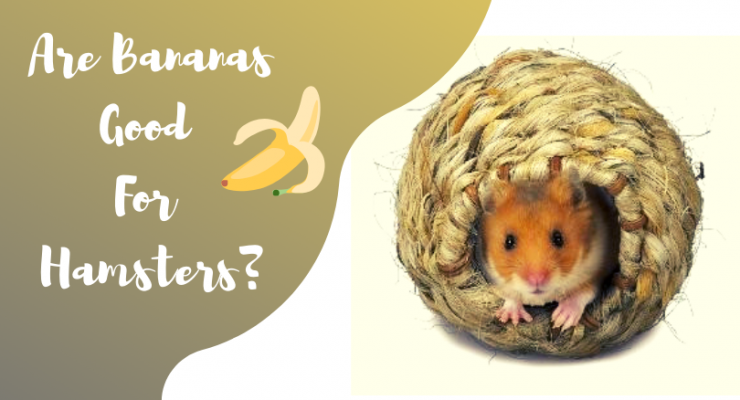 are bananas good for hamsters