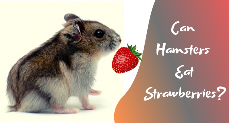 are strawberries good for hamsters